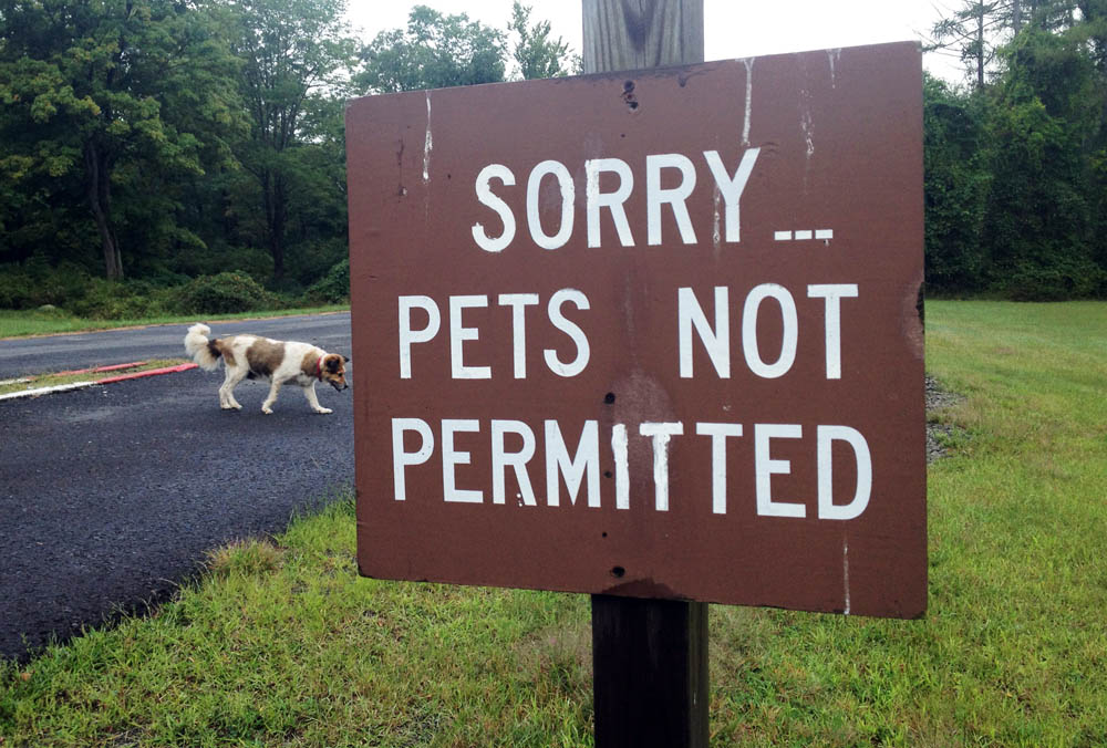 "Dog walks behind ""No Pets Allowed"" sign at the now-closed Lake Sebago Beach, in Harriman State Park"