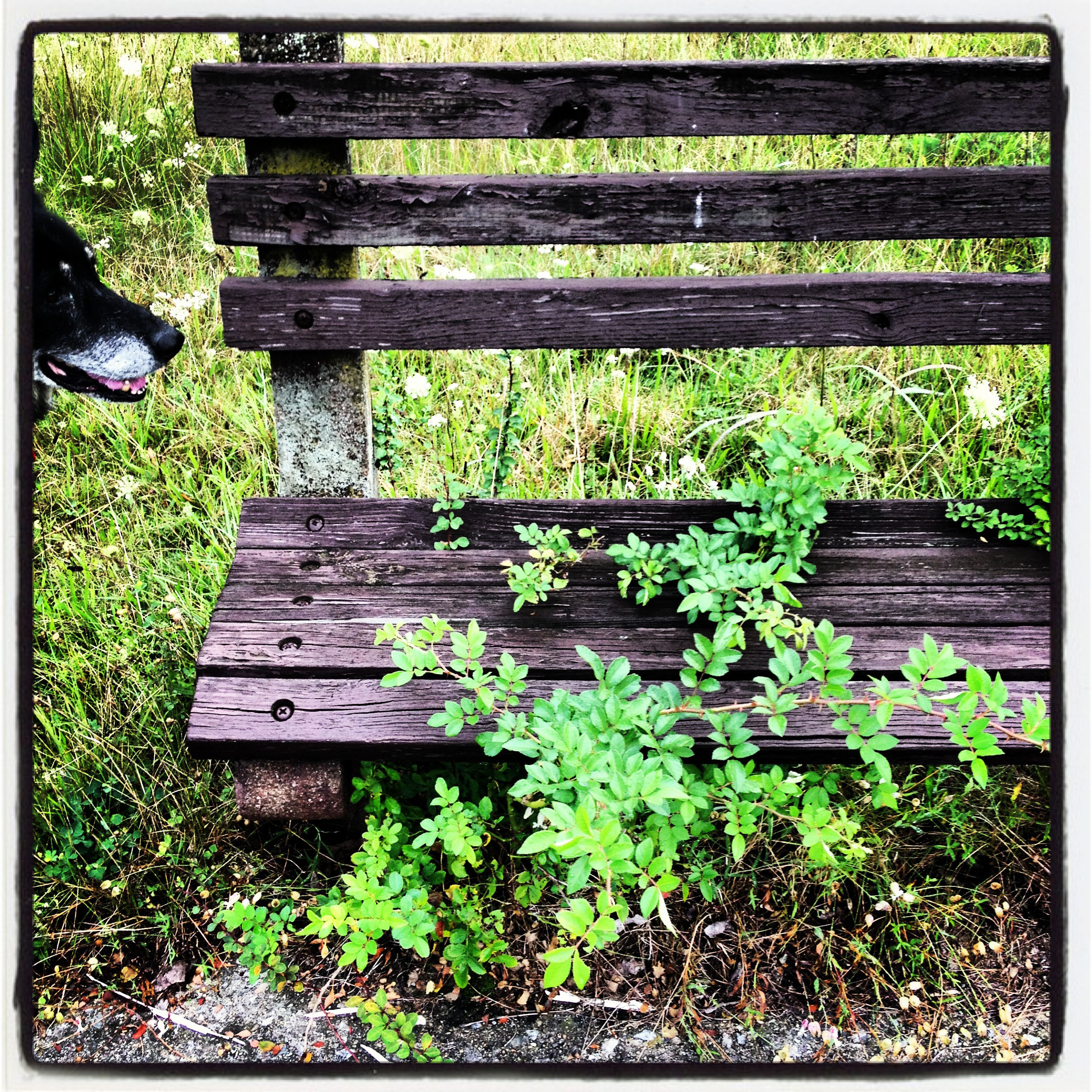 An old overgrown pedestrian's bench along the walkway at Lake Sebago Beach at Harriman State Park New York.