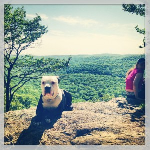 A dog takes a break on the Ramapo-Dunderberg trail on West Mountain. The Timp-Torne Trail and the R-D Trail may be combined for a loop hike that will take you all day, and afford you great views of the Hudson River and the New York City skyline.