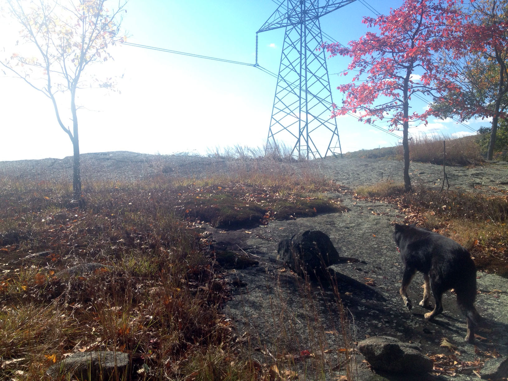 powerlinez_and_wolf2_harriman_state_park