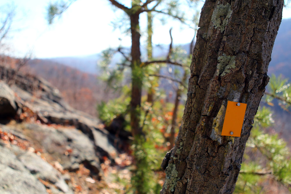 The yellow-blazed Suffern-Bear Mountain trail at the top of the Pyngyp.