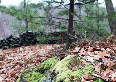 Moss, pine, oak and stone on trail.