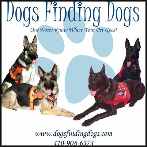 finding pet